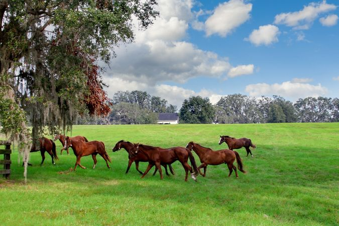 Golden Ocala Golf and Equestrian Club - Real Estate 9