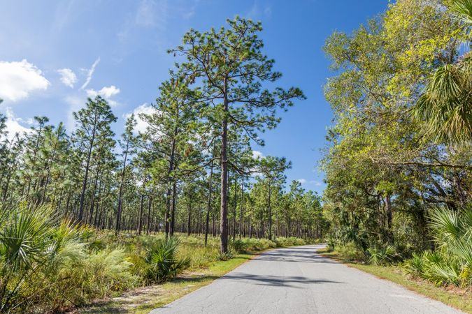 Apopka - Homes for Sale 2